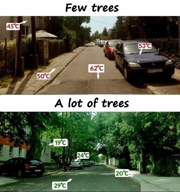 Trees and temperature