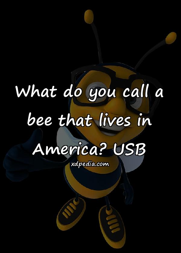 What do you call a bee that lives in America? USB