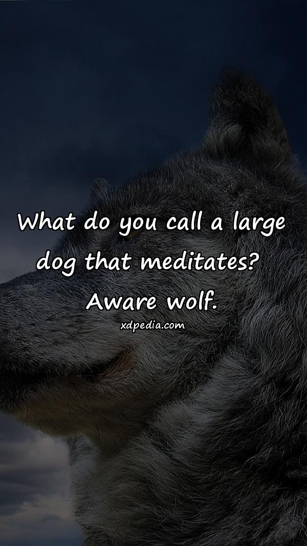 What do you call a large dog that meditates? Aware wolf.