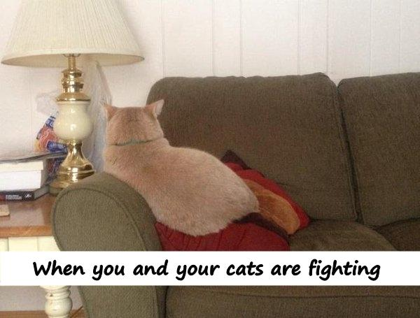When you and your cats are fighting
