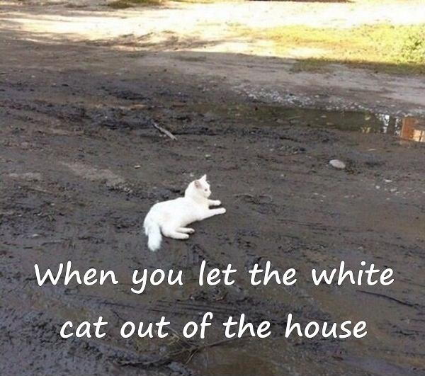 When you let the white cat out of the house