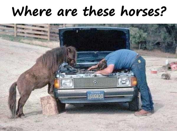 Where are these horses?