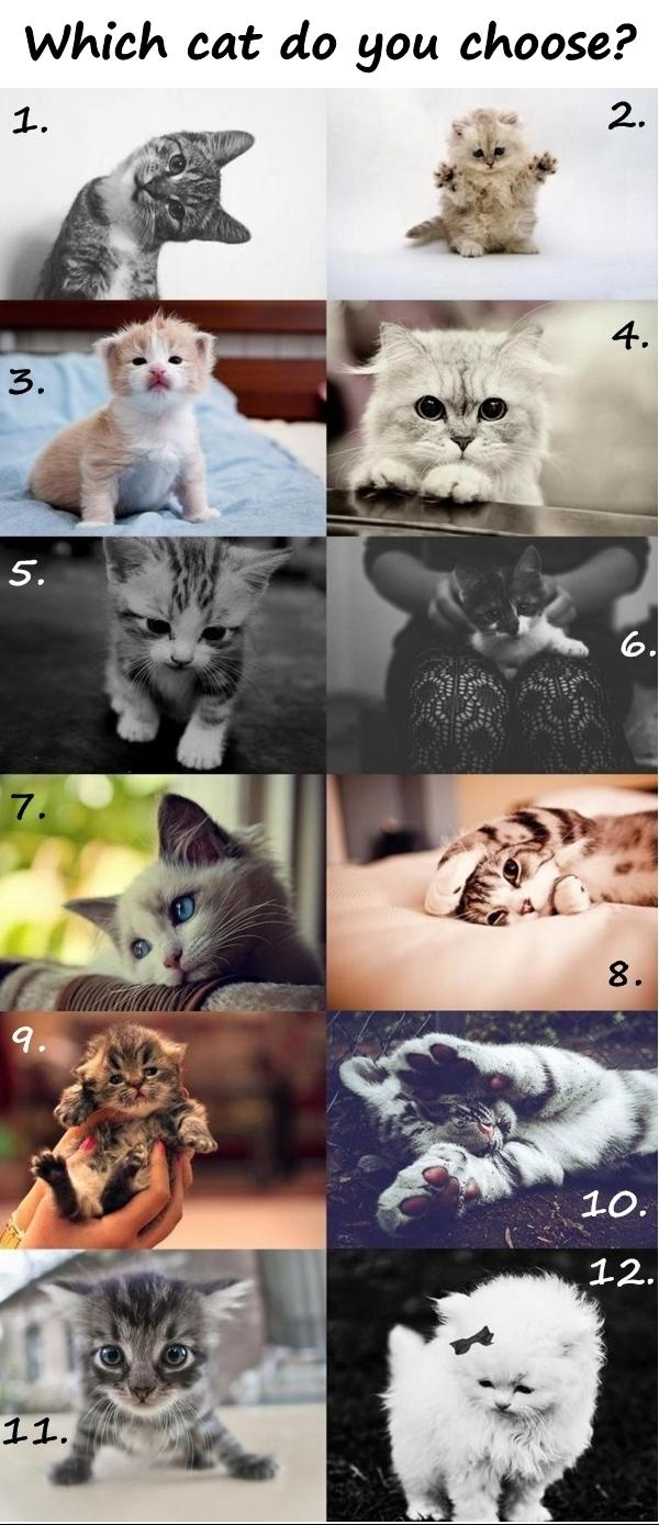 Which cat do you choose?
