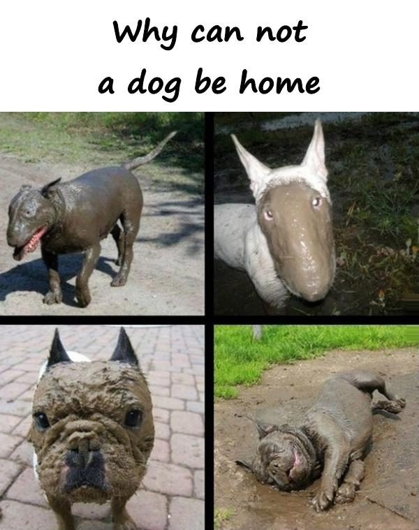 Why can not a dog be home