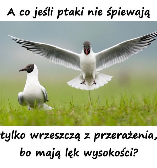 A co jeśli ptaki nie śpiewają tylko wrzeszczą z przerażenia, bo mają lęk wysokości?