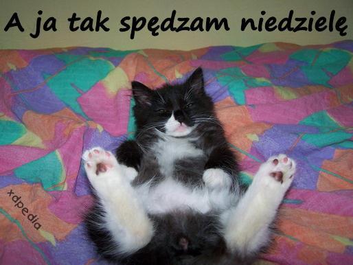 A ja tak spędzam niedzielę Tagi: demotywator, kot, kociak, kotek, niedziela, demotywatory, demot, odpoczynek, wolne, słodziak, ken.