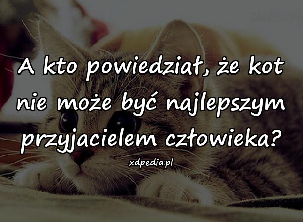 A kto powiedział, że kot nie może być najlepszym przyjacielem człowieka?