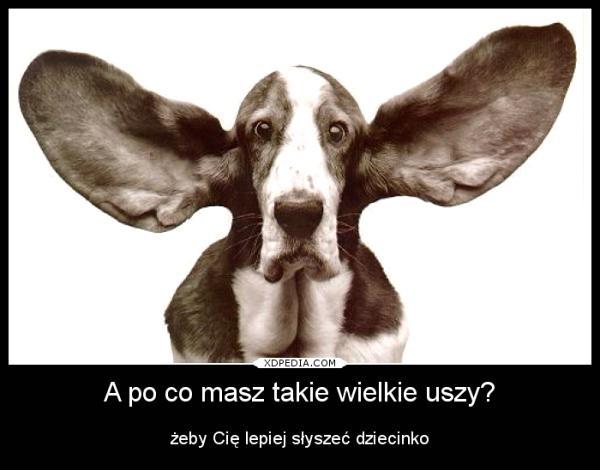 A po co masz takie wielkie uszy? Żeby Cię lepiej słyszeć dziecinko