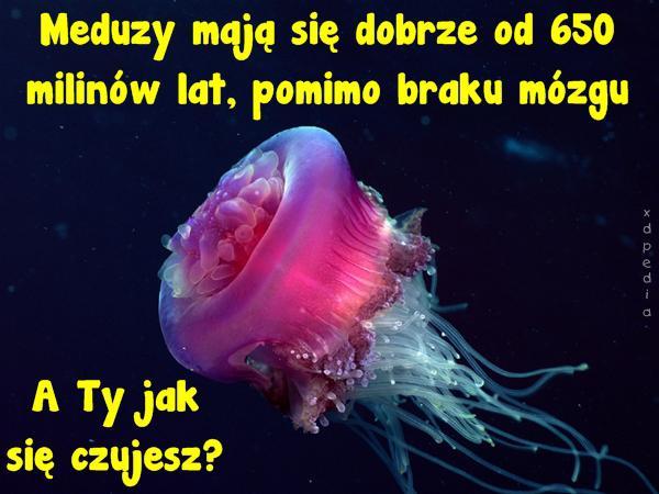 Meduzy mają się dobrze od 650 milinów lat, pomimo braku mózgu A Ty jak się czujesz?
