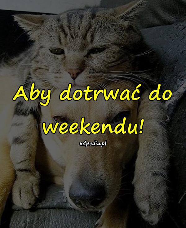 Aby dotrwać do weekendu!