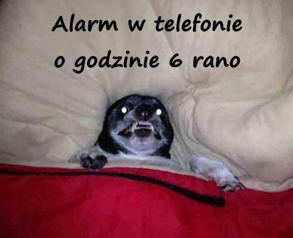 Alarm w telefonie o godzinie 6 rano