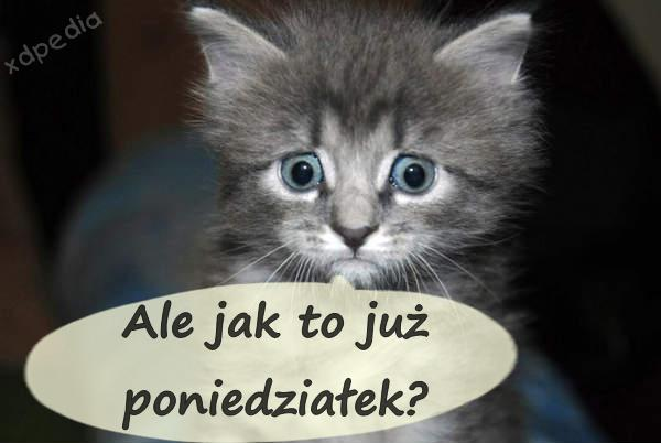 Ale jak to już poniedziałek? Tagi: kwejk, kot, kociak, kotek, poniedziałek, weekend, komiks, słodziak, zdziwko, zdziwienie.