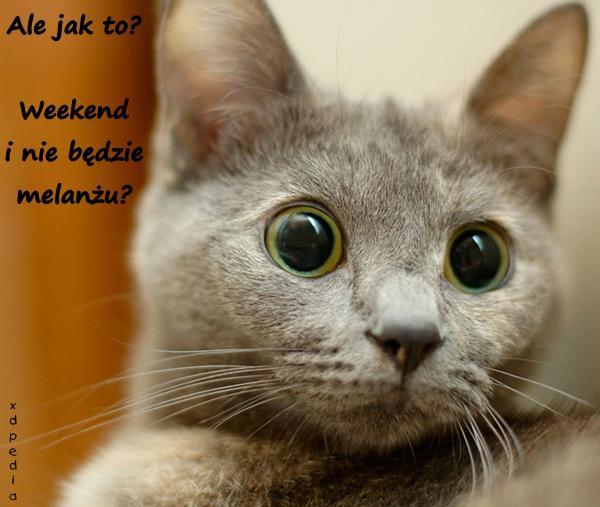 Ale jak to? Weekend i nie będzie melanżu? Tagi: kot, kociak, memy, mem, weekend, melanż, impreza, łikend, słodziak, zdziwko, zdziwienie, kulty.