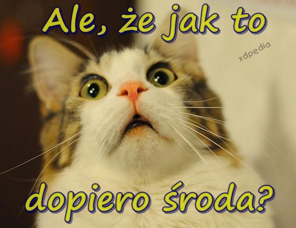 Kot Kociak Wnerw śmieszne Obrazki Wkurw Xdpedia 165983