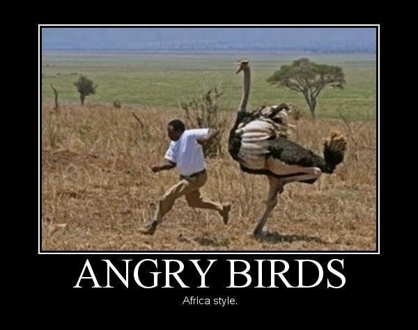Angry birds atakują! Nie uciekniesz przed nimi!
