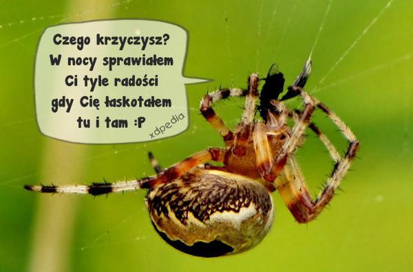 Arachnofobia? Czego krzyczysz?