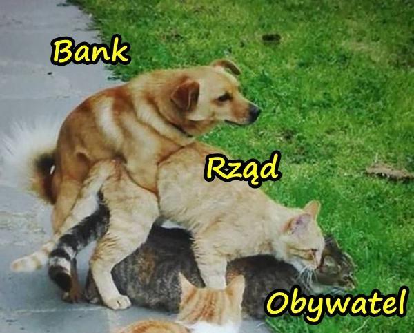 Bank, rząd i obywatel