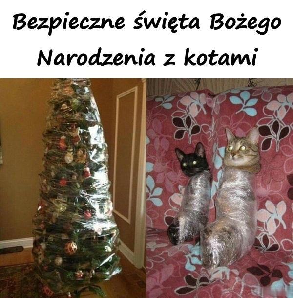 Bezpieczne święta Bożego Narodzenia z kotami