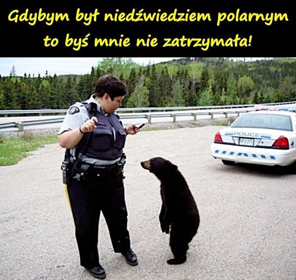 Gdybym był niedźwiedziem polarnym, to byś mnie nie zatrzymała!