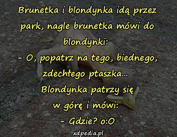 Brunetka i blondynka idą przez park, nagle brunetka mówi do blondynki: - O, popatrz na tego, biednego, zdechłego ptaszka... Blondynka patrzy się w górę i mówi: - Gdzie? o:O