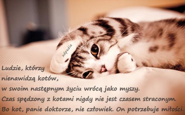 Besty Kociak Aforyzmy Cytaty Cytaty O Miłości Koty Cytat