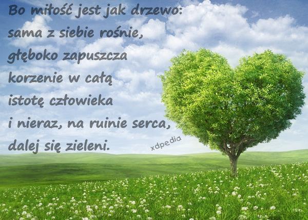 Bo miłość jest jak drzewo: sama z siebie rośnie, głęboko zapuszcza korzenie w całą istotę człowieka i nieraz, na ruinie serca, dalej się zieleni.
