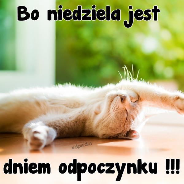 Bo niedziela jest dniem odpoczynku !!! Tagi: memy, mem, niedziela, leniuchowanie, odpoczynek, wolne, besty.