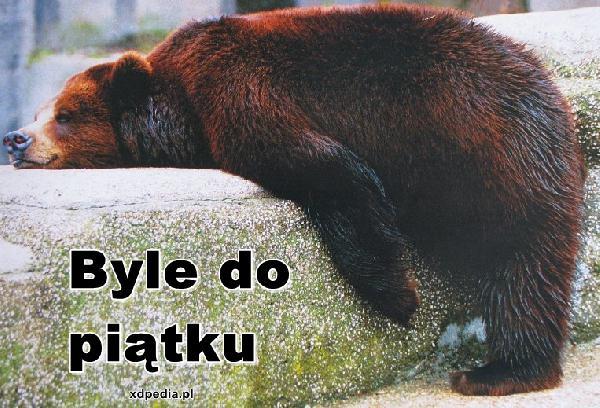 Niedźwiedź leniuch - Byle do piątku. Tagi: kwejk, memy, niedźwiedź, mem, piątek, leniuch, czekamy.