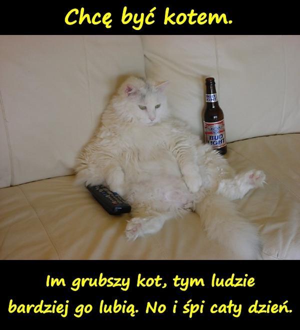 Humor Talia Kot Memy śmieszne Teksty Spanie Besty Xdpedia