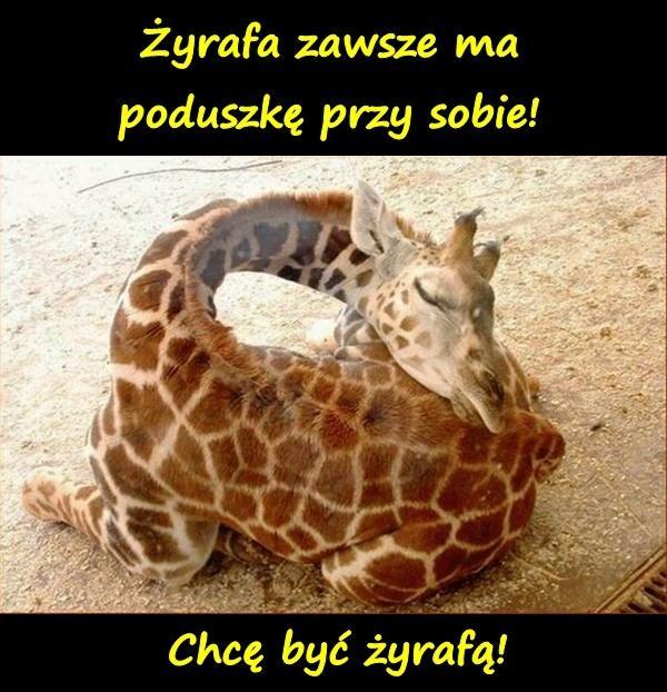 Chcę być żyrafą! Żyrafa zawsze ma poduszkę przy sobie!