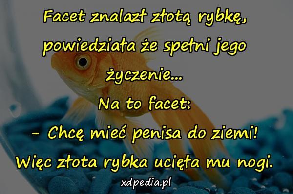 Facet znalazł złotą rybkę, powiedziała że spełni jego życzenie... Na to facet: - Chcę mieć penisa do ziemi! Więc złota rybka ucięła mu nogi.