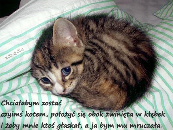Chciałabym zostać czyimś kotem, położyć się obok zwinięta w kłębek i żeby mnie ktoś głaskał, a ja bym mu mruczała.