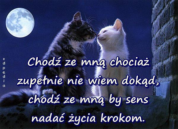 Chodź ze mną chociaż zupełnie nie wiem dokąd, chodź ze mną by sens nadać życia krokom. Tagi: miłość, razem, memy, życie, koty, mem, sens, uczucia, besty, kotki, kociaki, lovsy, temyśli.