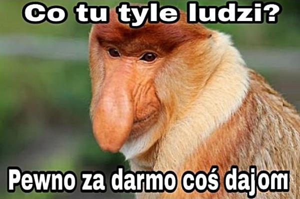 https://www.xdpedia.com/obrazki/co_tu_tyle_ludzi_36113.jpg