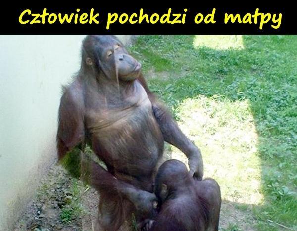 Człowiek pochodzi od małpy