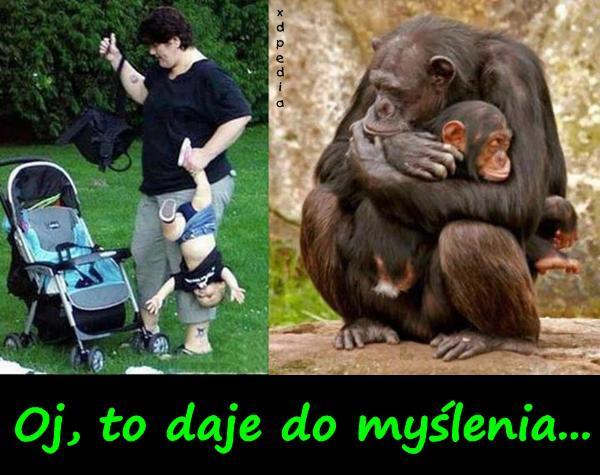 Człowiek vs. małpa - matczyna miłość