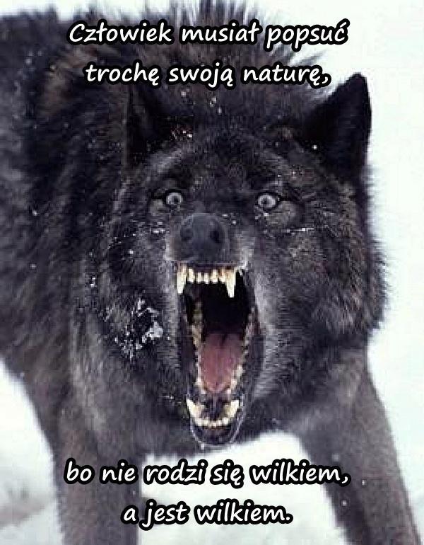 Człowiek musiał popsuć trochę swoją naturę, bo nie rodzi się wilkiem, a jest wilkiem.