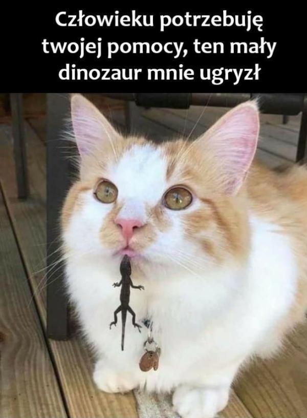 Człowieku potrzebuję twojej pomocy, ten mały dinozaur mnie ugryzł