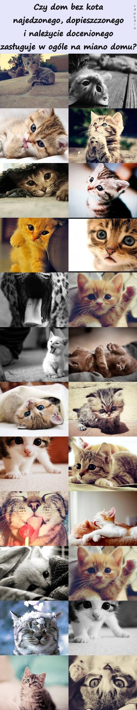 Czy dom bez kota najedzonego, dopieszczonego i należycie docenionego zasługuje w ogóle na miano domu?