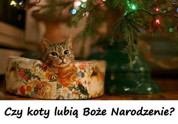 Humor Humor Choinka Besty Kot Memy śmieszne Teksty Xdpedia