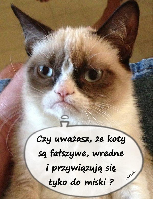Czy uważasz, że koty są fałszywe, wredne i przywiązują się tyko do miski ?
