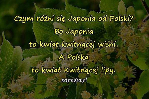 Czym różni się Japonia od Polski? Bo Japonia to kwiat kwitnącej wiśni, A Polska to kwiat Kwitnącej lipy.