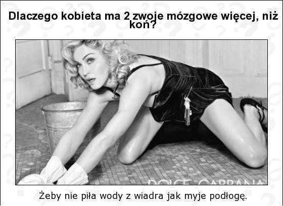 Dlaczego kobieta ma dwa zwoje mózgowe więcej niż koń? Żeby nie piła wody z wiadra jak myje podłogę.