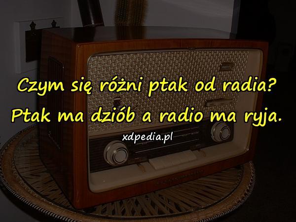 Czym się różni ptak od radia? Ptak ma dziób a radio ma ryja.