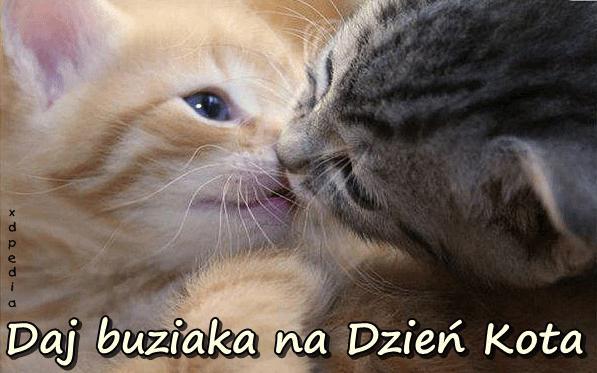 Daj buziaka na Dzień Kota