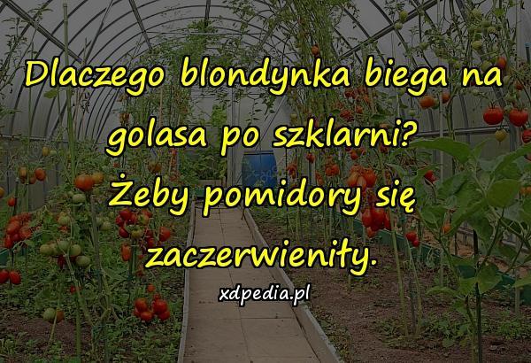Dlaczego blondynka biega na golasa po szklarni? Żeby pomidory się zaczerwieniły.