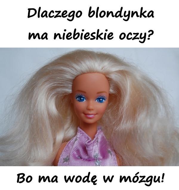 Dlaczego blondynka ma niebieskie oczy? Bo ma wodę w mózgu!