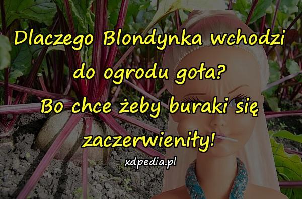 Dlaczego Blondynka wchodzi do ogrodu goła? Bo chce żeby buraki się zaczerwieniły!
