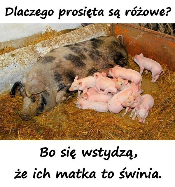 Dlaczego prosięta są różowe? Bo się wstydzą, że ich matka to świnia.