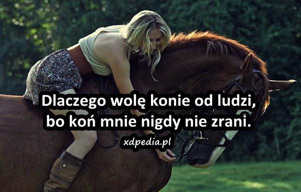Dlaczego wolę konie od ludzi, bo koń mnie nigdy nie zrani.